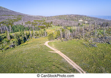 4WD trail and forest after wildfire