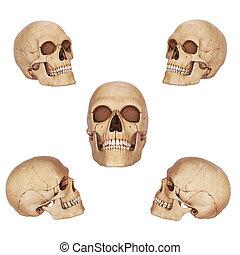 5, 別, 頭骨, 光景