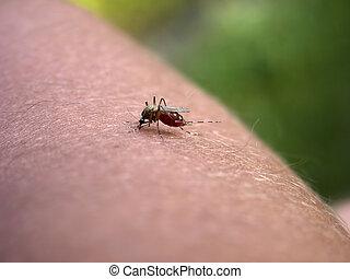5., hand., teil, mein, moskito