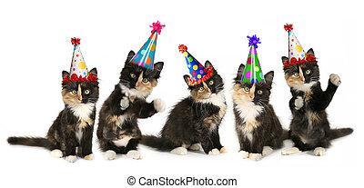 5, katjes, op, een, witte achtergrond, met, jarig, hoedjes