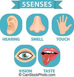 5 senses icon set. Touch, smell, hearing, vision, taste....