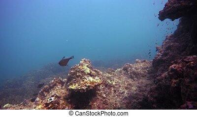 5, thaïlande, beau, meters., profondeur, coraux, phuket