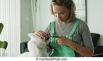 5-Woman Cleaning Dog Mouth Teeth With Toothbrush - Pets,...