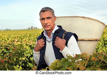 50 years old man holding basket amongst vines