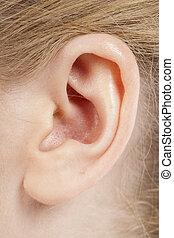 512 female ear