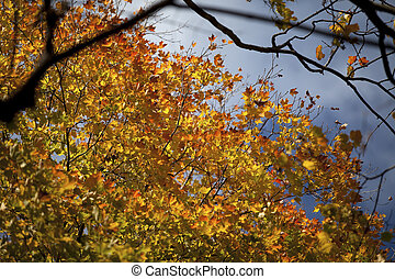 533 view of autumn leaves