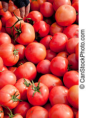 57, pomodori