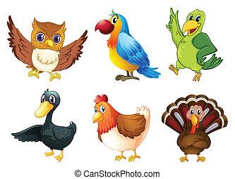 6, 別, 種, の, 鳥