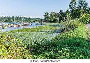 6, lac, seattle, rivage