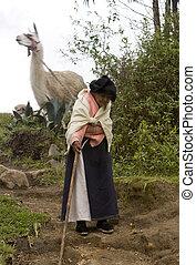 632 Elderly woman pulling Llama downhill Ecuador - An...