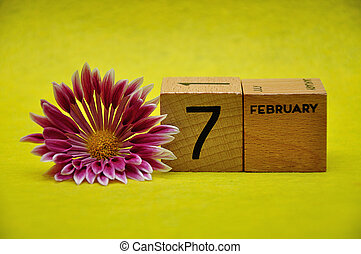 7 February on wooden blocks with a pink and white aster on a yellow background