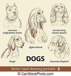 8, chiens, dessin, remettre ensemble