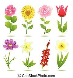 8, fiore, set, icone