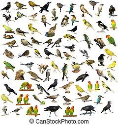 81, fotografier, av, fåglar, isolerat