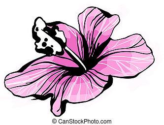 82, bud(2).jpg, hibiskus, blomstrande, skiss, blomma