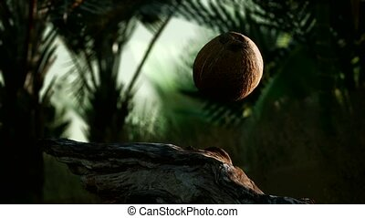 8K extreme slow motion falling coconut in jungle