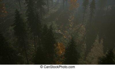 8K Forest in Autumn Morning Mist - 8K forest in autumn...
