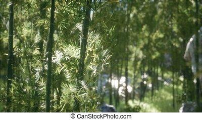 8K Windy Tranquil Arashiyama Bamboo Grove Looking Up in ...