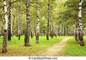 9 月, 秋, 木立ち, 小道, シラカバ