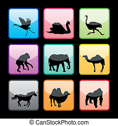 9, animales salvajes, botones, conjunto