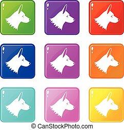 9, collie, jogo, cão, ícones