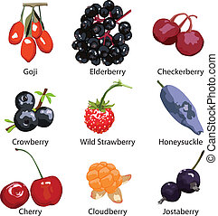 9 different berries isolated - set of different berries on a...