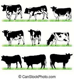 9, kühe, und, stiere, silhouetten, satz