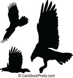 ação, águias, silhuetas, vetorial