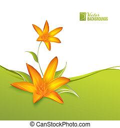 açafrão, flores mola, para, seu, cartão, design.