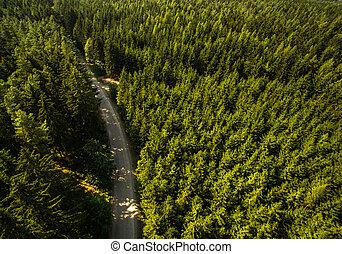 aéreo, bosques, vasto, vista