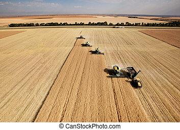aéreo, colheita, vista