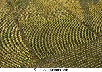 aéreo, crops.