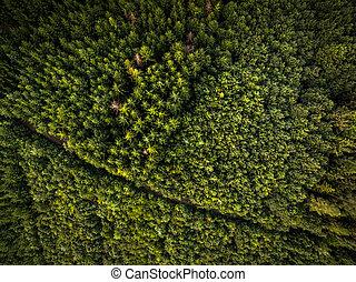 aéreo, florestas, vasto, vista