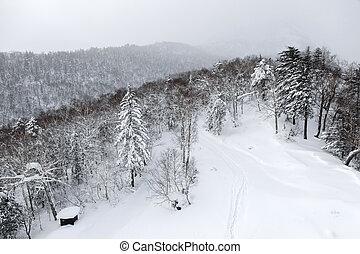 aéreo, Inverno, vista