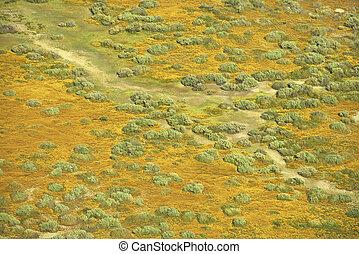 aéreo, pradaria, paisagem.
