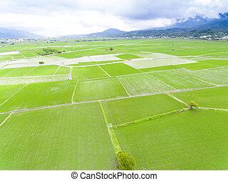aéreo, primavera, campo, taiwan, arroz, vista