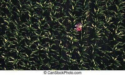 aéreo, tabuleta, campo milho, femininas, agricultor, vista