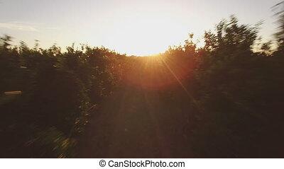 aérien, arbre, champ, coucher soleil, orange, vue