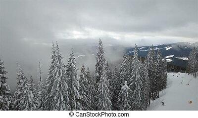 aérien, arbre., neige-couvert, pin, vue