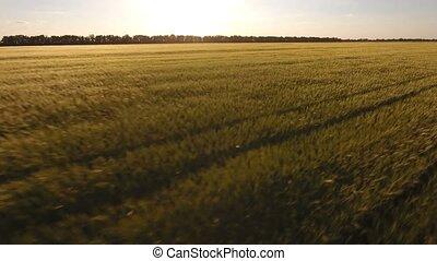 aérien, champ, surprenant, blé, coucher soleil, coup