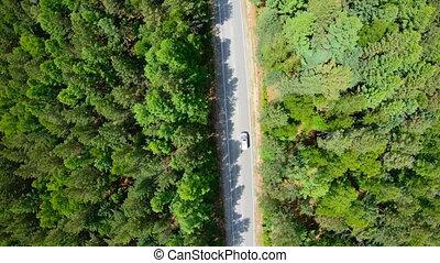 aérien, conduite, voiture, forêt, blanc, route, vue