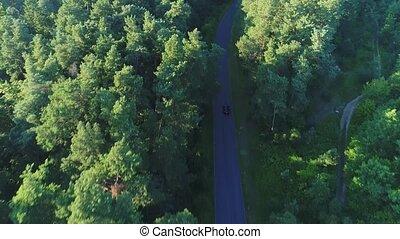 aérien, conduite, voiture, forêt, sport, vue