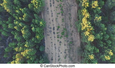 aérien, firebreak, arbre, pin, milieu, forêt, vue