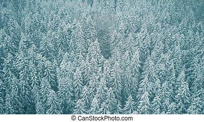 aérien, hiver, neige, arbres, couvert, vue