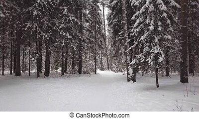 aérien, hiver, sommet, wood., enquête, vue