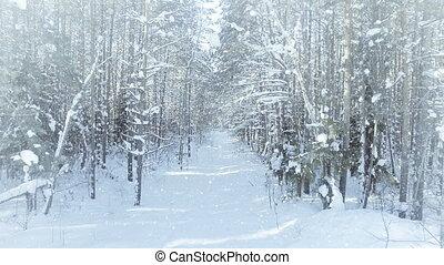aérien, hiver, surgelé, dense, chute neige, fourré, forêt, soleil, gentil