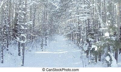 aérien, hiver, surgelé, dense, zoom, chute neige, effet, fourré, chariot, soleil, gentil, forêt