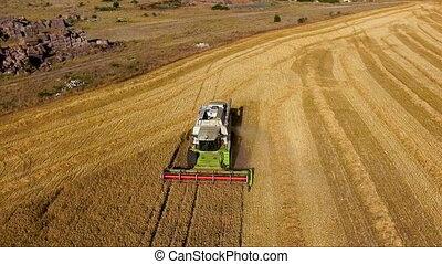 aérien, moissonneuse, vue, récolte, blé, rassemble, grain, champ, combiner, season., sunset., récolte