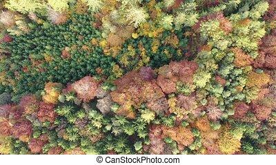 aérien, multi, automne, vue, scénique, arbres, coloré, paysage
