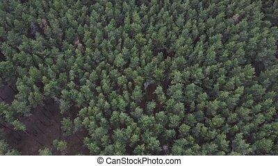 aérien, sommet, texture, vue, forêt, bourdon, forêt, au-...